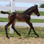 HOT BOSTON NIGHTS - colt out of Boston Invitation (Owner: The Blanton Family)