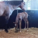 SHADOWVALLEYS IM TITANIUM - Filly out of RR Invite Me Anytime (Owner: Bev Rout of Australia)